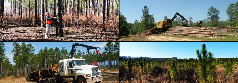 timber-harvesting-trucking-reforestation4