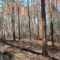 Prescribed Burning or Control Burning