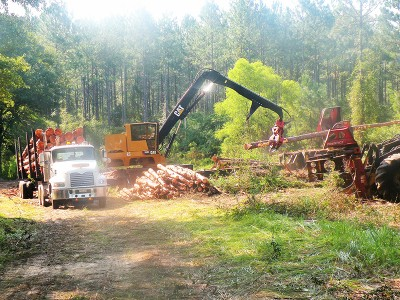 New Timber Skidder Loading Logs | Choctaw Land & Timber of Northwest Florida and South Alabama
